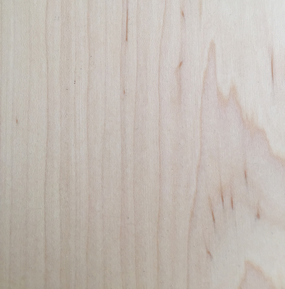 Hard Maple Close Up