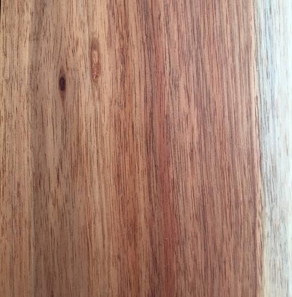 SA Blackwood Close Up