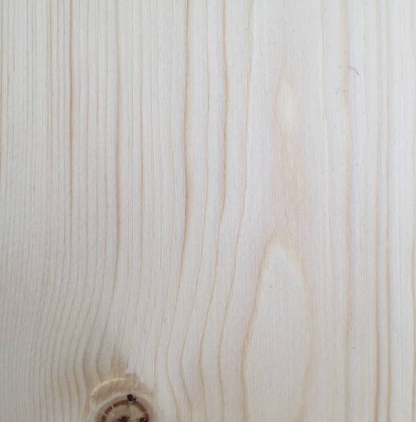 Spruce Close Up